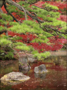 Red And Green Photo Framed Prints - Zen Framed Print by Eena Bo