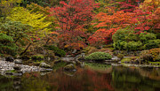 Japanese Garden Photos - Zen Garden Reflected by Mike Reid