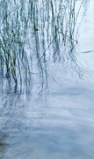 Water Prints Prints - Zen Reeds Left Print by Theresa Tahara