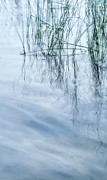 Water Prints Prints - Zen Reeds Right Print by Theresa Tahara