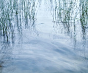 Water Prints Prints - Zen Reeds Print by Theresa Tahara