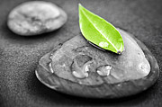 Leaves Art - Zen stones by Elena Elisseeva