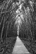 Jamie Pham - Zen Walk