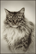 Kitty Cat Photo Prints - Zena Print by Lynn Andrews