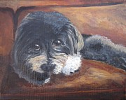 Havanese Paintings - Zico the Havanese #2 by Vivian Haberfeld