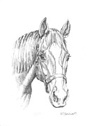 Thoroughbred Drawings - Ziggy by Richard De Wolfe