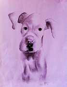Boxer Drawings Framed Prints - Ziggy Sketch Framed Print by Jillian Bunton