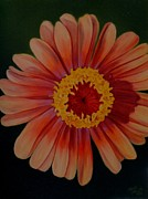 Flower Still Life Prints Posters - Zinnia in the Sun Poster by Sharon Challand