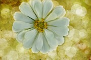 Zinnias Photos - Zinnia Sparkle by Jan Amiss Photography