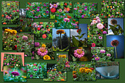 Zinnias Digital Art - Zinnias Collage Rectangle by Thomas Woolworth