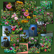 Coller Posters - Zinnias Collage Square Poster by Thomas Woolworth
