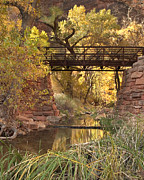 Fall Foliage Posters - Zion Bridge Poster by Adam Romanowicz