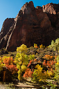 Yellow Leaves Prints - Zion Canyon Walls and Fall Colors Virgin River Utah Print by Robert Ford