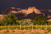 Geobob Prints - Zion Peaks lit by Dramatic Sunlight dark and light and storm clouds Rockville Utah Print by Robert Ford