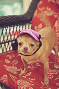 Tiny Dogs Photos - Zoes Visor by Laurie Search