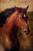 Dressage Horse Originals - Zoey One of a Kind Original by Lyndsey Warren