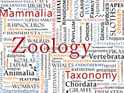Elephants Digital Art - Zoology 1 - Mammals in Typography by Nola Lee Kelsey