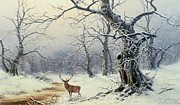 Snow Scene Framed Prints -  A Stag in a Wooded Landscape  Framed Print by Nils Hans Christiansen