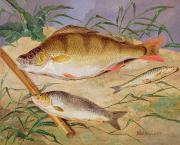 Fishing Painting Prints -  An Anglers Catch of Coarse Fish Print by D Wolstenholme