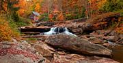 Randall Branham -  autumn leaves at the Mill