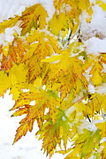Autumn Prints Prints -  Autumn Snow Portrait Print by James Bo Insogna
