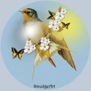 Aves Digital Art -   Barn Swallow by Madeline  Allen - SmudgeArt