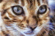 Cat Face Prints -  Bengal Kitten Print by Teresa Zieba