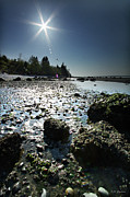 Tidepool Framed Prints -  Birch Bay Beach WA Framed Print by DMSprouse Art