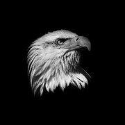 American Independance Metal Prints -  Black and White American Eagle Metal Print by Steve McKinzie