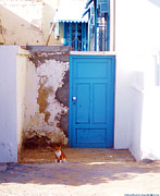 Blue Door Cat Print by Anthony Novembre