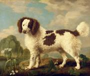 Brown Painting Prints -  Brown and White Norfolk or Water Spaniel Print by George Stubbs