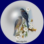 Aves Digital Art -  Collared Sparrow Hawk by Madeline  Allen - SmudgeArt