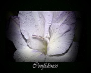 Purple Gladiolas Posters -  Confidence Poster by Eva Thomas