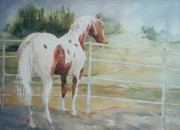 Pinto Paintings -  Contemplating Freedom by Maryann Schigur