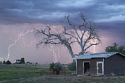 Unusual Lightning Framed Prints -  Country Horses Lightning Storm NE Boulder County CO 76 Framed Print by James Bo Insogna