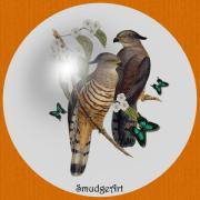 Aves Digital Art -  Crested Hawk by Madeline  Allen - SmudgeArt