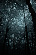 Haunted Forest Prints -  Dark Forest Silhouetted Against Sky Print by Ethiriel  Photography