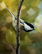 Chickadee Art -  Day Dreams by Reflective Moments  Photography and Digital Art Images