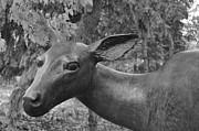 Daryl Macintyre -  Deer Statue