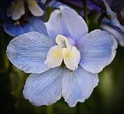 Delphinium Orchid  Print by Michael Putnam