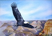 American Eagle Paintings -  Eagle   American Bald Eagle by Sandra Phryce-Jones
