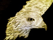 Eagle Pastels Metal Prints -  Eagle Metal Print by Samantha Haggan