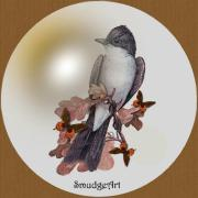 Aves Digital Art -  Eastern Kingbird by Madeline  Allen - SmudgeArt