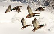 Andrea Kollo -  Flock Together