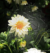 Pretty Flowers Photos -  Flower -Plastic Wrap by Cheryl Young