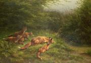 Vixen Paintings -  Foxes waiting for the prey   by Carl Friedrich Deiker