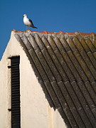 Larus Delawarensis Photos -  Gull on the Roof by Odon Czintos