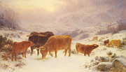 Cattle Paintings -  Hard Times 1898 by Basil Bradley