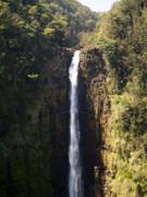 Hawaiian Pictures Prints -  Island Waterfalls Print by Athala Carole Bruckner