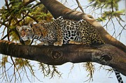 Wildcats Paintings -  Leopard ready to pounce by Francis  Njoroge